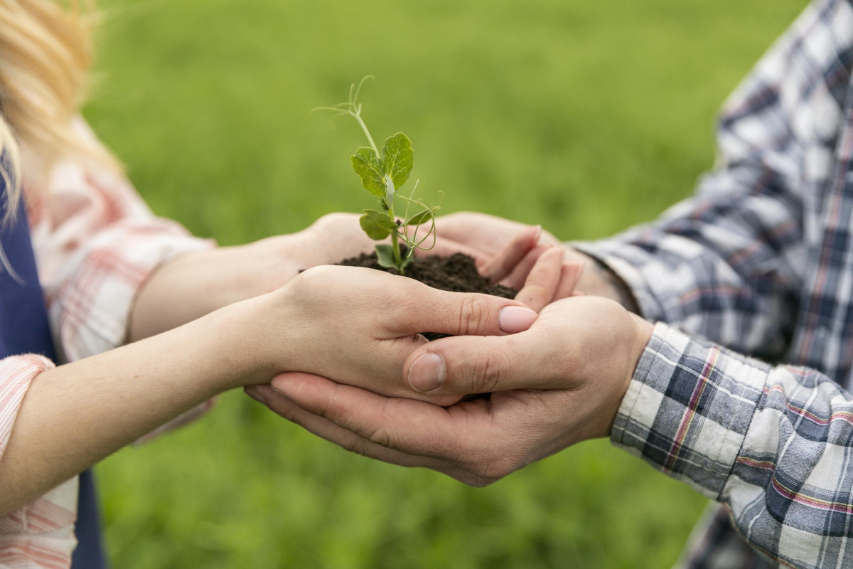 adult hands and child hands holding a sapling